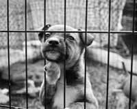 Support Online Registry for Animal Abusers