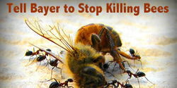 Tell Bayer: Stop Killing Bees!
