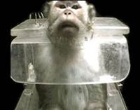 Mazor Farms~ Stop Breeding Monkeys For Labs