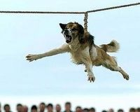STOP THE BARBARIC RITUAL OF 'TRICHANE' (DOG SPINNING)