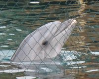 Free the Captive Dolphins in Turkey
