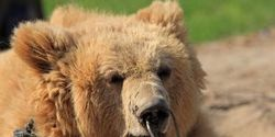 PAKISTAN: BEAR-BAITING CONTINUES: SEE SOUTH CAROLINA BILL OF 2/25/2011