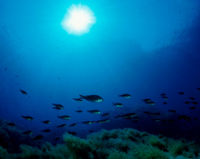 Investigate the Impact of Seabed Mining Before It's Too Late