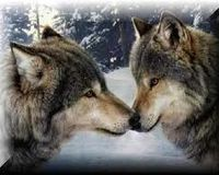 Tell the DNR Commissioner To Stop The Wolf Hunt