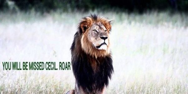 DEMAND JUSTICE FOR CECIL THE LION IN ZIMBABWE