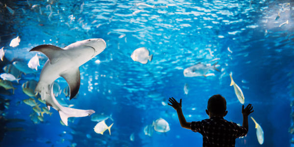 Boy in aquarium looking at sharks