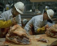 The High Speed of Meat and Poultry Processing Contaminates Meat and Injures Workers.