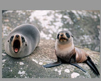 Full Prison Sentence for Killing Seals