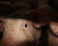 Stop Paying the Price for Factory Farming