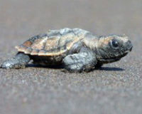 Trinidad, Don't Bulldoze Any More Turtle Eggs!