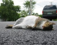 STOP KILLING SQUIRRELS AND BIRDS BY LITTERING