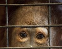 PLEASE HELP: The zoo where 200 animals are kept caged and made to perform tricks for visitors... on