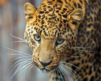 Protect Jaguars: Stop the Rosemont Copper Project in Arizona