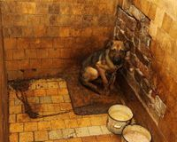 Stop the cruel scientific experiments on dogs in Ukraine, in the Donetsk Medical University.