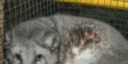 Boycott Cruise Fashion until they go Fur-Free