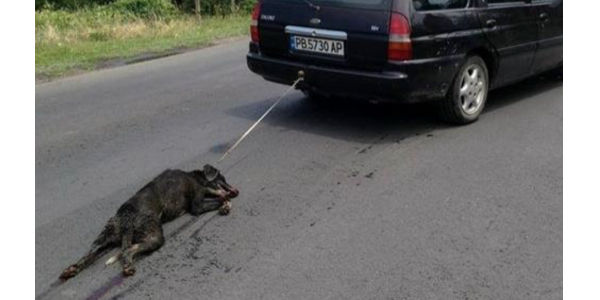 peion: Arrest man who dragged this dog behind his car!!