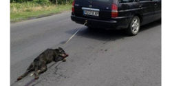 Arrest man who dragged this dog behind his car!!
