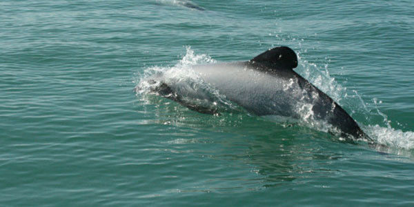 Dolphin, Care2 petitions