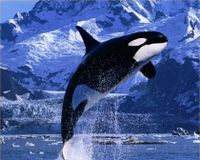 Help Free Tilikum Into Sanctuary!