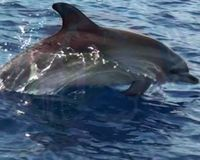 Pakistan, PLEASE Do Not Exploit Dolphins