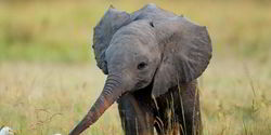 Protect elephants from human greed. Tusk belongs to the elephants