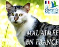 Faisons de la France un pays responsable du bien-être de ses chats.