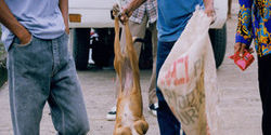 Stop the Illegal Dog Meat Trade in the Philippines