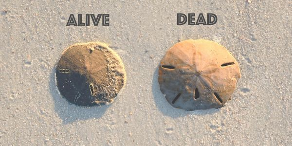 petition get signs put up to save the sand dollar population on