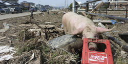 HELP THE STARVING ANIMALS OF FUKUSHIMA