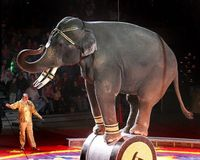 GROUPON- pull the deal on the George Carden Circus Spectacular.