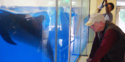 Shut Down the Smallest Dolphin Tank in the World