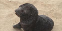 Stop the Namibia Seal Slaughter