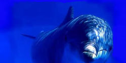 Hold BP Responsible for Mass Dolphin Deaths