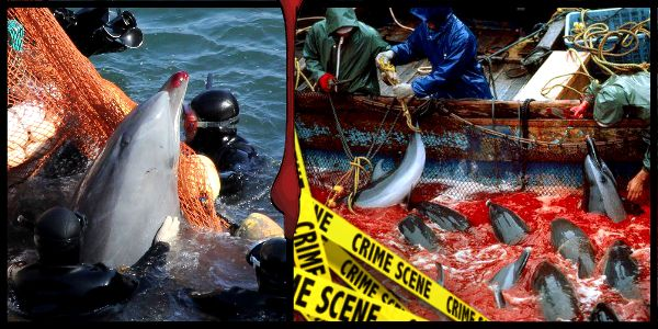 END the Slaughter of the Taiji Dolphins & Pilot Whales!