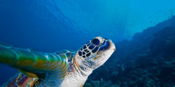 Protect Marine Turtles in the Philippines