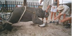 Stop Circus Elephant Torture