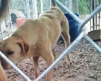 Increase Animal Abuse/Neglect Penalties in Arkansas