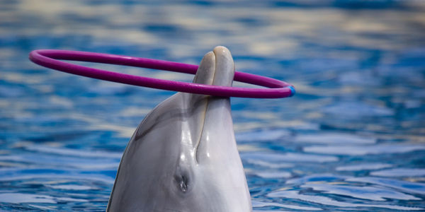 Tell Virgin to Stop Promoting Whale and Dolphin Shows