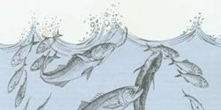 Tell the State of Virginia to Protect Menhaden