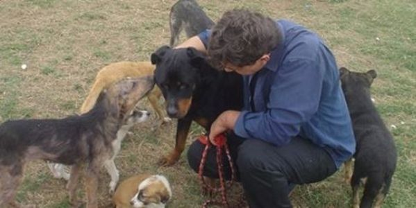 Stop the removal and euthanasia of dogs from South Kosovo Dog & Cat Shelter