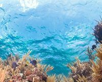 Save the Micro Atolls of Cozumel!