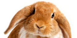 Ban All Animal-Tested Cosmetics in the EU!