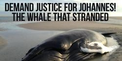 Prevent selling the body of humphback whale Johannes to Naturalis