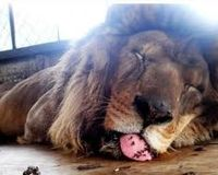 Stop use circus animals