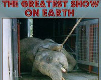 In the Circus, 2 Hours of Entertainment = A Lifetime of Misery