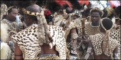 Stop the Illegal Slaughter of Leopards for Religious Clothing