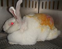 Act Now to Stop Cruel Cosmetics Tests on Animals in the U.S.