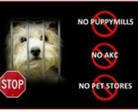 Save the Coton de Tulear from AKC and puppy mills!