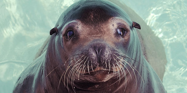 Stop Animal Cruelty at MarineLand
