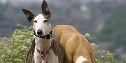 NO TO DOG RACING IN SOUTH AFRICA~Monday, June 23~ENDS ON 23 JUNE